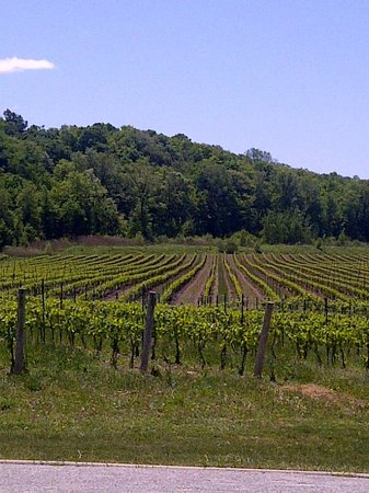 Niagara College Teaching Winery : view of vinyards