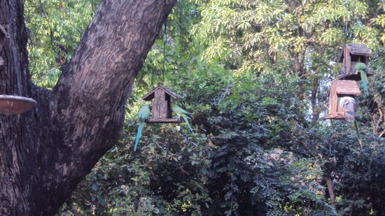 Lutyens Bungalow: Morning with the parakeets