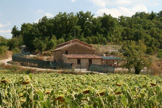 Castiglione della Valle, Italia: Casa Nestore Self Catering Apartments