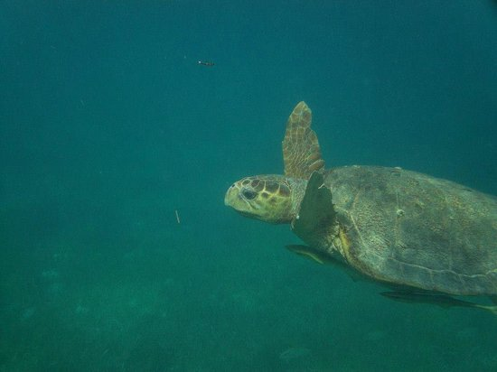 Turtle Inn: Just an 'ordinary' sight when snorkeling