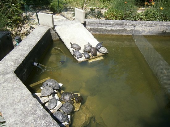château le Martinet : The turtle pond