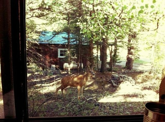 ‪‪Tall Pine Resort‬: Right outside our kitchen window around 8am!‬