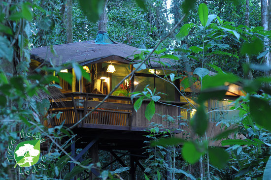 Tree House Lodge : up in the tree