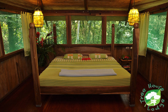 Tree House Lodge: room up in the sangrillo tree