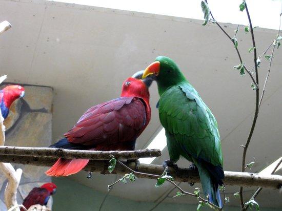 Augsburg Zoo: Kuss
