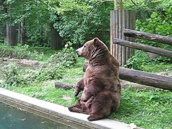 Augsburg Zoo: Braunbär