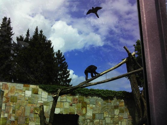 Augsburg Zoo: Schimpanse
