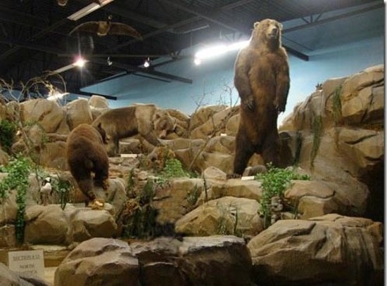 Rosenbruch Wildlife Museum: There must be 50 different displays such as this.