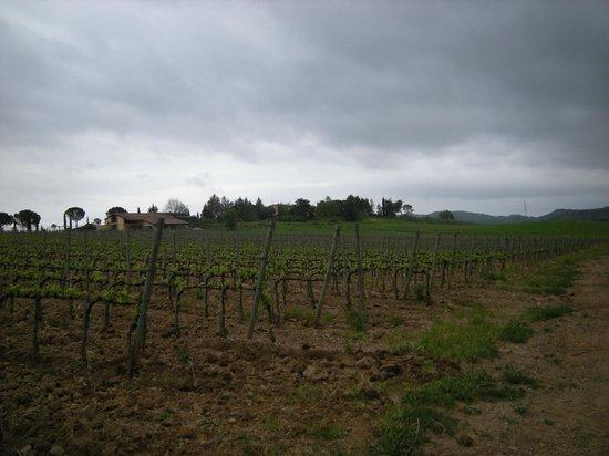 Agriturismo Montepozzalino: panoramica e agriturismo dalla passeggiata