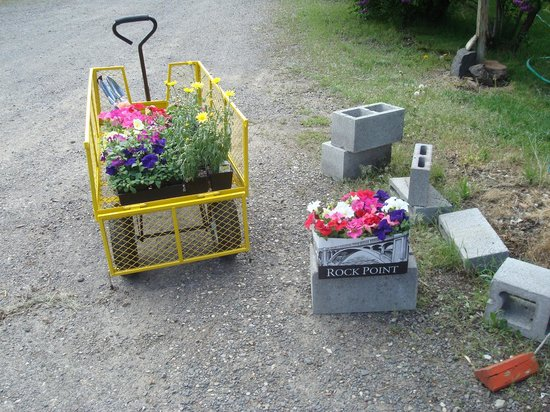 Myrtle Trees Motel: Our home flower garden getting started