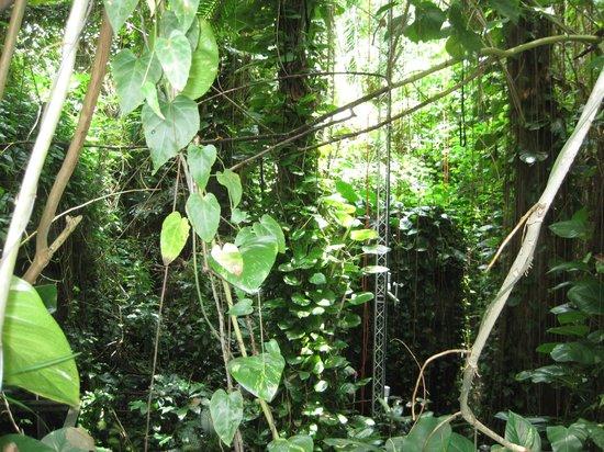 Biosphere 2: Rainforest Vegatation
