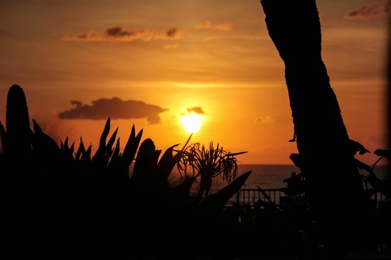 Daytona Shores Inn and Suites: Patio view of the sunrise.