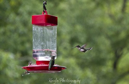 Morning Glory Inn: Hummingbird feeder on porch