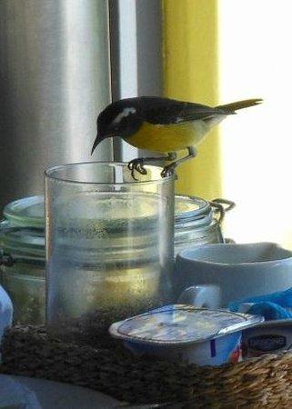 Karibuni Lodge: Sharing remains of breakfast with a sugar bird
