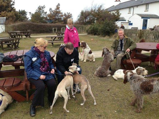 Dunwich Heath and Beach: Happy dog walkers