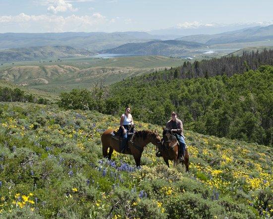 Rusty Spurr Ranch: Wild flower meadow