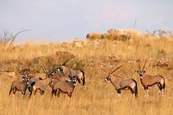 ROOISAND Desert Ranch: Magnificient landscapes and an abundance of wildlife