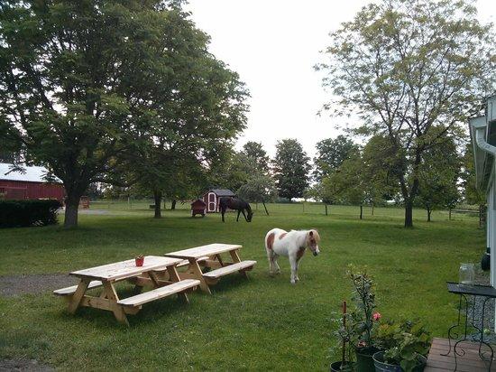 Inn BTween Farm Bed and Breakfast: Grounds