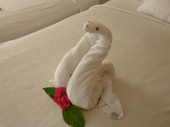Allegro Cozumel: Serpent en serviette! Un animal différent chaque jours...