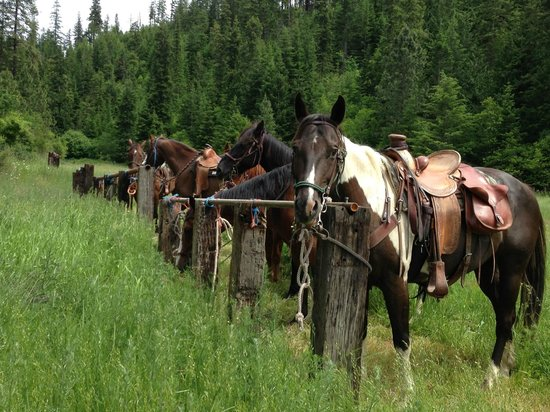 Red Horse Mountain Ranch: Taking a break in the meadow