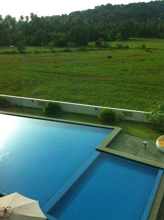 favehotel Cenang Beach - Langkawi: the pool