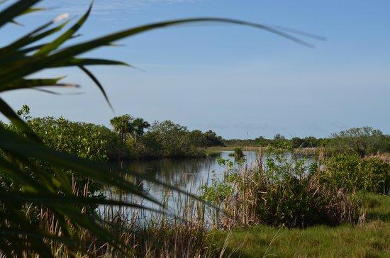 写真Capt Mitch's - Everglades Private Airboat Tours枚