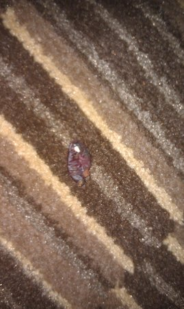 Holiday Inn Syracuse/Liverpool Airport Hotel : Ew. Mysterious gross squishy thing that may or may not have legs, that I stepped on.