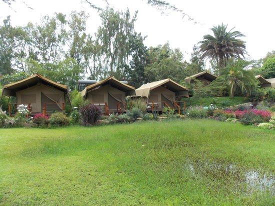 Wildebeest Eco Camp: The semi-permanent tents.