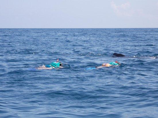 Turistica Moguel - Day Tours: Nadando con el tiburón-ballena