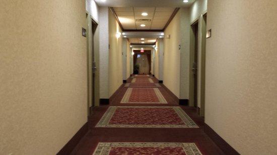 Hampton Inn Fort Stockton: hallway decor