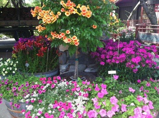 Ironstone Vineyards: Flowers at Ironstone Winery