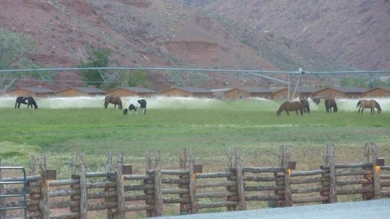 Red Cliffs Lodge: pasture -- for horses after riding those city slickerrs