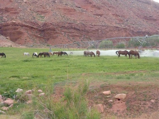 Red Cliffs Lodge: view from the door of our room