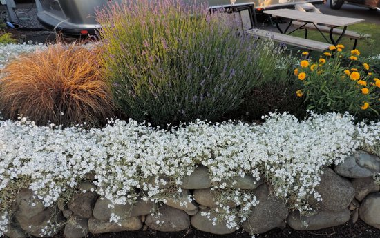 GilGal Oasis RV Park : Great landscaping
