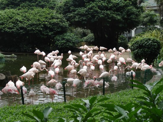 Prince Hotel (Marco Polo Hotels): Flamingos in Kowloon Park