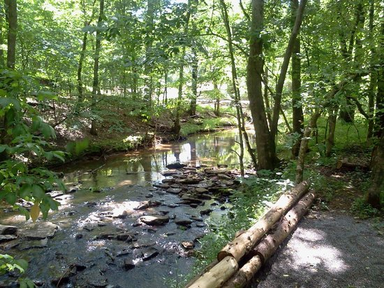 Bledsoe Creek State Park: One of the many sites on their Hiking Trails!