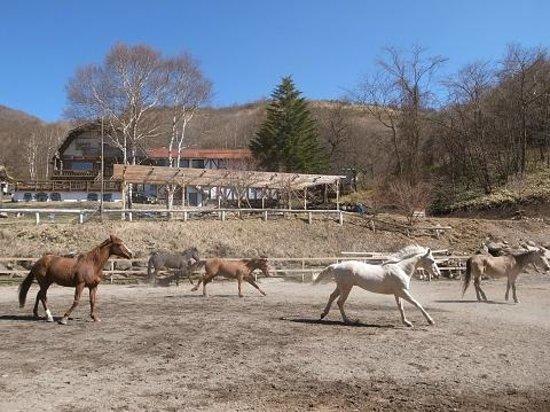 Hope Lodge: 馬たちも時々放牧