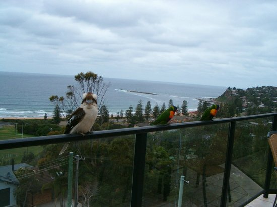 Newport, Australië: Our birdlife