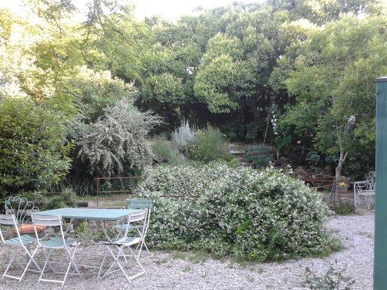 Molino di Molanoce: La vegetazione nel cortile del B&B