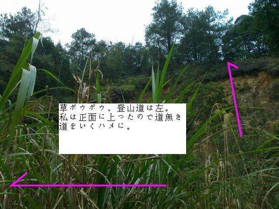 Shaoguan Yunji Mountain: 登山道解説