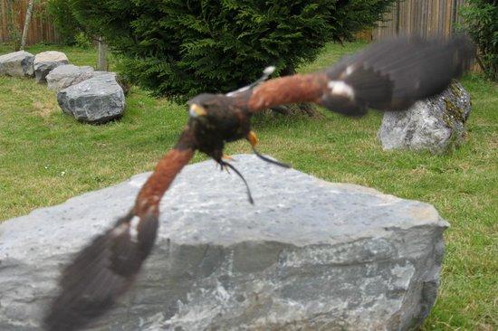 Les Aigles du Leman: un vol magestueux