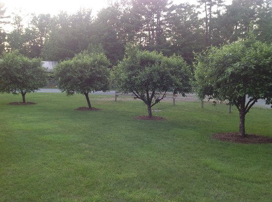 Jacobs Brook Campground: The apple trees.