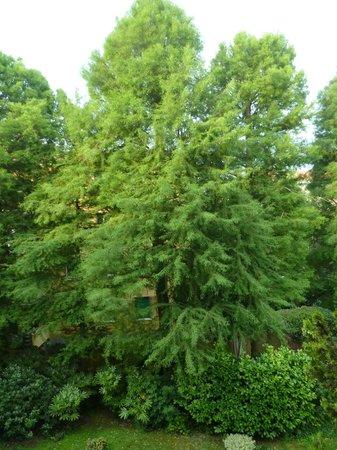 Hotel Villa Mabapa: Bick in den alten Baumbestand im Garten