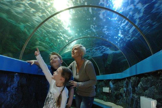 SeaQuarium Rhyl