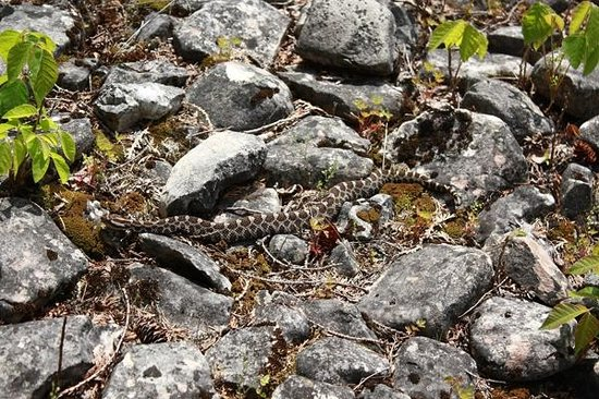 Tobermory, Canadá: Be careful of rattlesnakes!