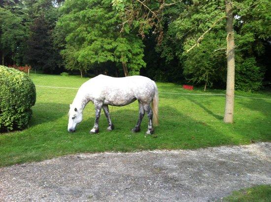 Manoir de la Maison Blanche : Лошадь