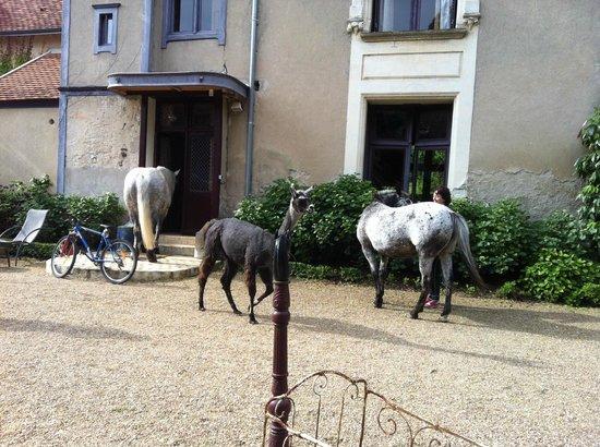 Manoir de la Maison Blanche: Дом хозяки отеля, номера расположены напротив