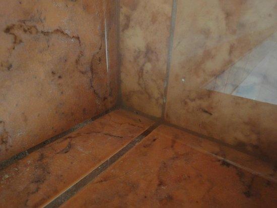 Paradise Inn & Suites: Wasser in der Dusche stehend
