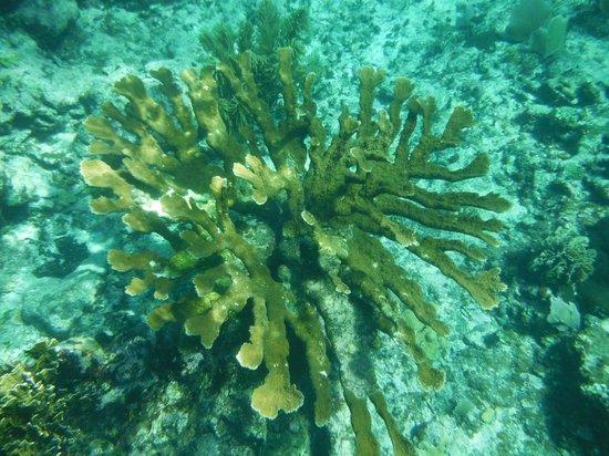 Jaguar Reef Lodge & Spa: Snorkeling Adventure- underwater