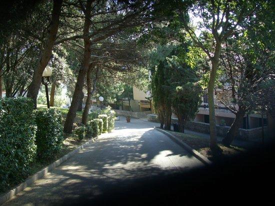 Albona Hotel & Residence: viale entrata del hotel Albona